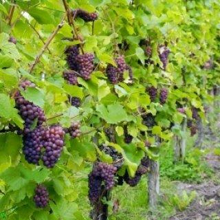 """Фонд """"Земеделие"""" приема документи по мярката за инвестиции във винарски изби до 19 февруари"""