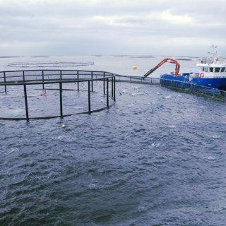 """Фондът на фондовете ще кредитира сектор """"Рибарство"""" в новия програмен период"""
